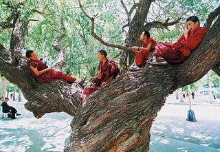 Tibetan_monk_3